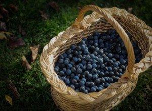 Liqueur de prunelle par Louis Bour